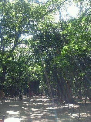 糺の森2.jpg